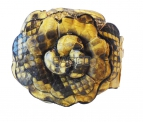 Браслет Цветок из питона abf002
